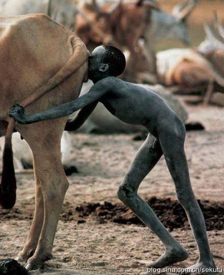 《给牛子宫吹气的人》(摄影师 野町和嘉 在苏丹拍摄)给牛的子宫吹气,由此带来性刺激,可使牛产奶更多,这个男孩子的右手,轻轻地抚摸牛的乳房。男孩和牛都很瘦